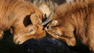 Fast & binding dispute resolution